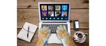 picture of animal paws using a laptop