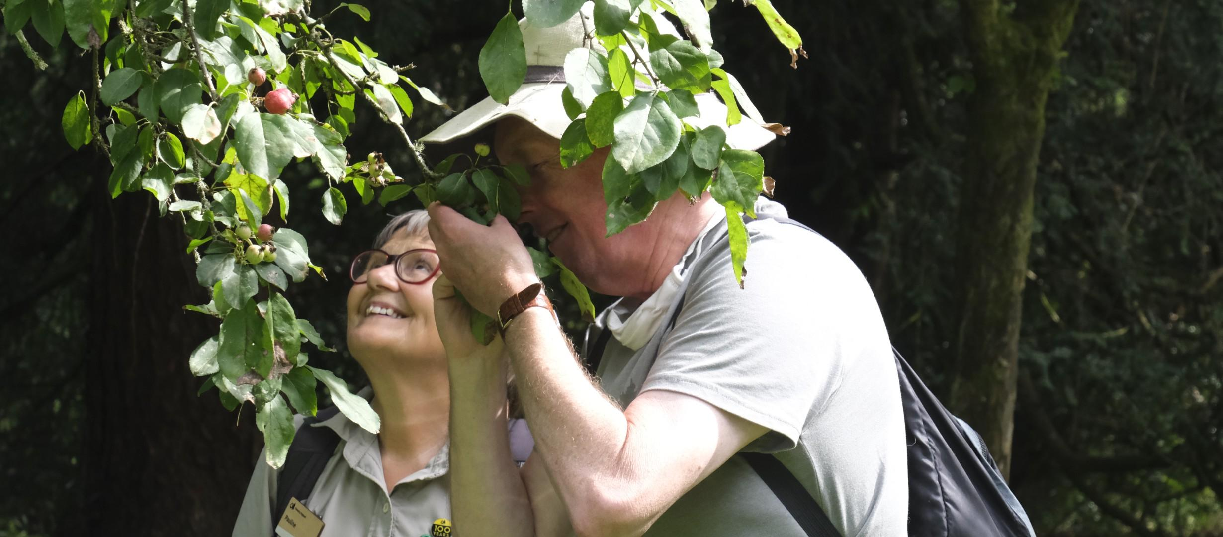 A gentleman brings a branch covered in lush green leaves close to his nose to smell the aroma. A woman by his side looks up joyfully towards the top of the tree.